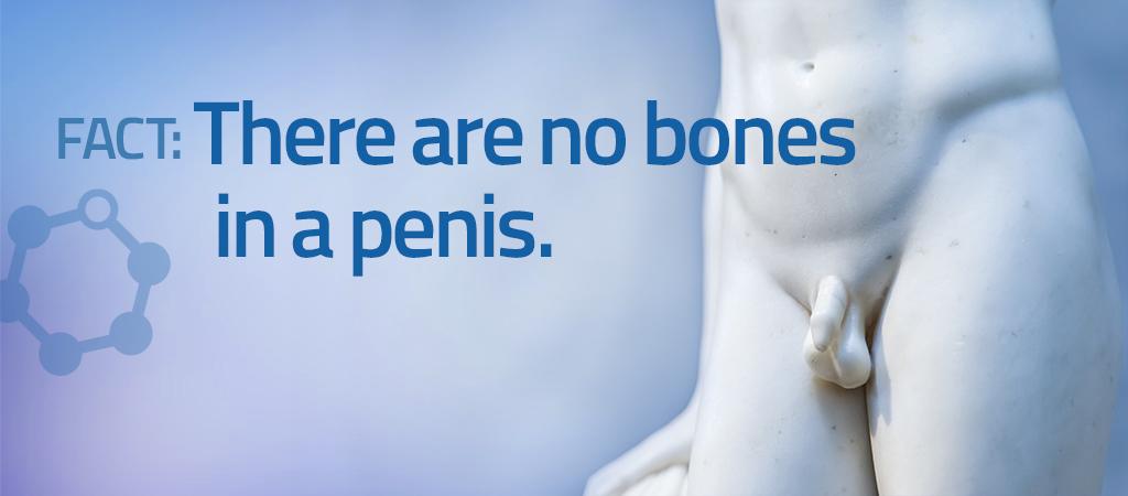 penile health at AUS