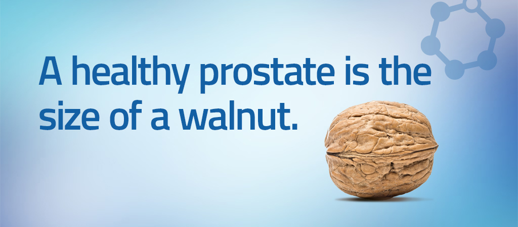 health prostate size of walnut
